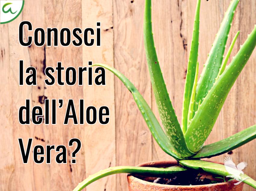L'Aloe Vera nella storia
