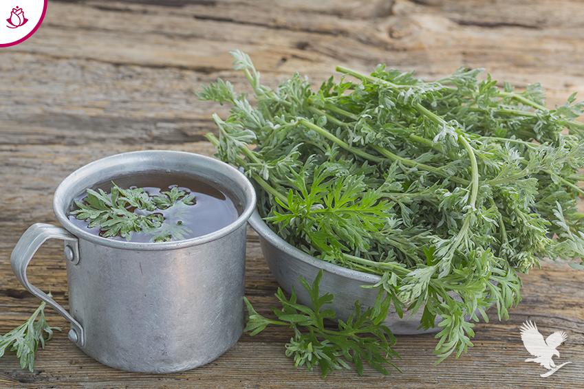 pianta di artemisia e infuso
