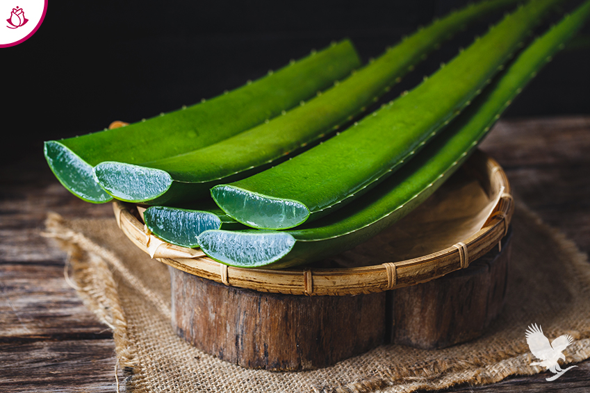 foglie aloe vera