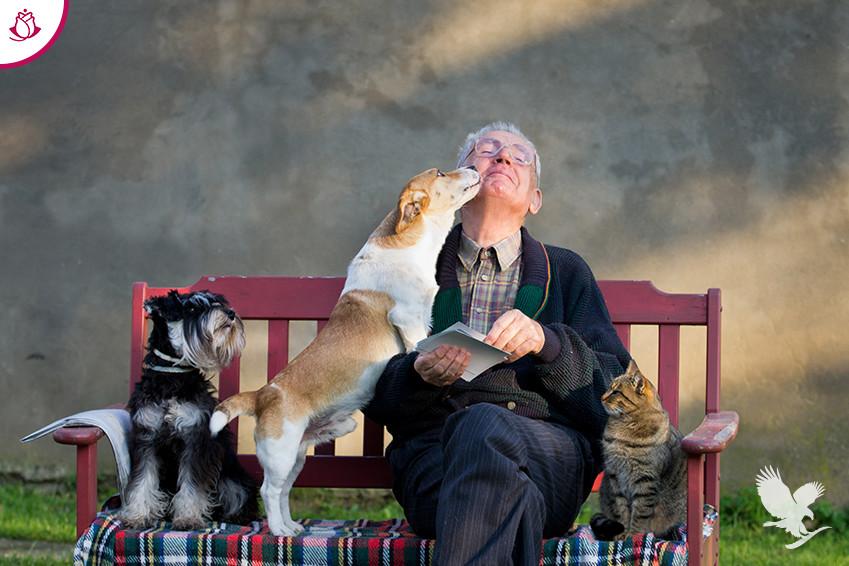anziano con cani da compagnia
