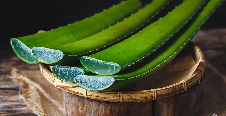 Cos'è il gel di Aloe Vera - SuccoAloeVera