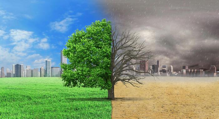 Succoaloevera Forever Living Impronta ecologica